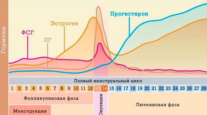 график повышения прогестерона и других гормонов