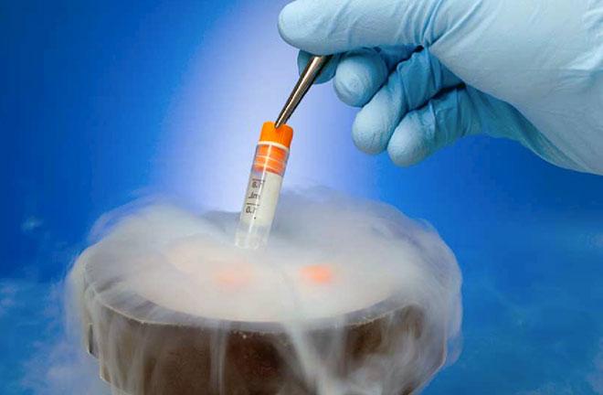 криоконсервация эмбрионов до лучшего момента для искусственного оплодотворения