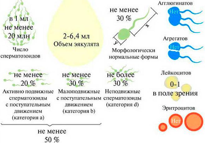 инфографика качественной спермы пригодной для экстракорпорального оплодотворения