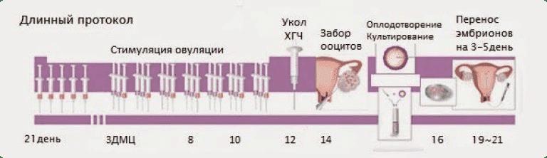 инфографика длинного протокола при эко