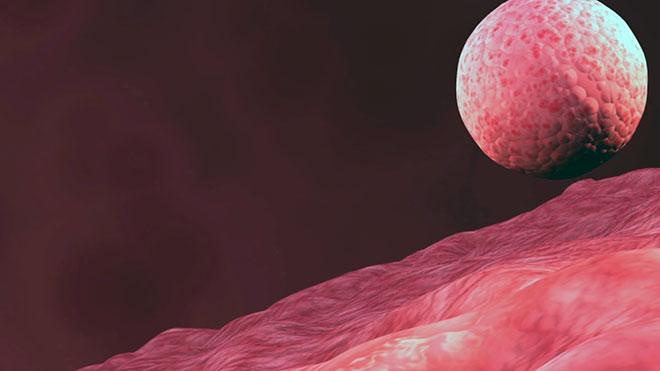 эмбрион человека в матке после подсадки