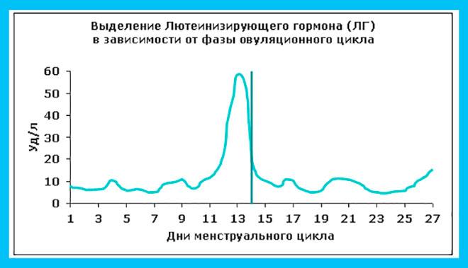 график концентрации ЛГ в разные периоды менструального цикла