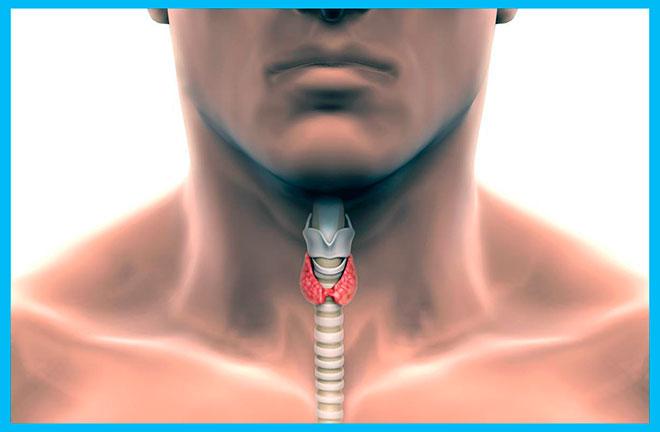 рисунок щитовидной железы у мужчины