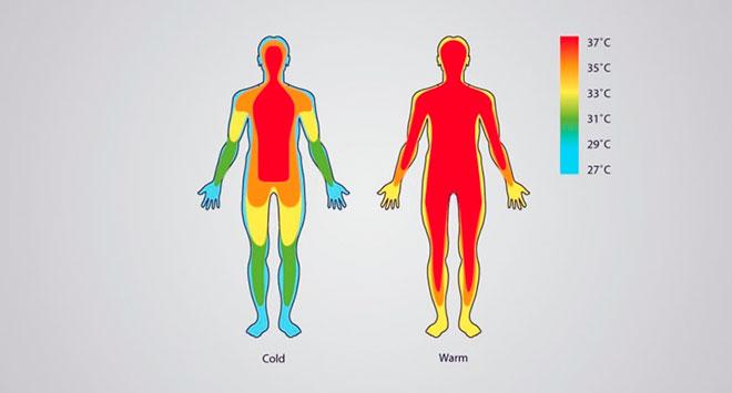 инфографика повышения температуры после переноса эмбриона