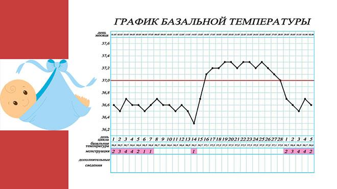 образец графика базальной температуры тела