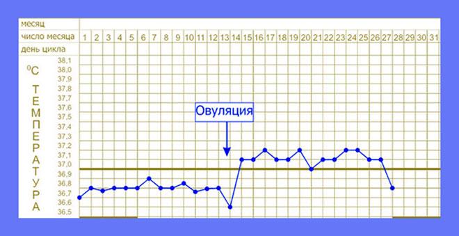 график измерения базальной температуры для определения дня начала овуляции