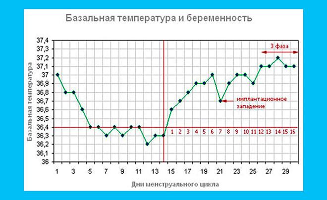 график базальной температуры для определения имплантационного западения