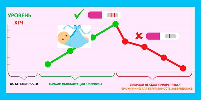 инфографика развития биохимической беременности