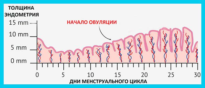 рисунок роста толщины эндометрия по дням менструального цикла