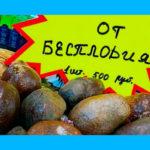 Орех мохилхин от бесплодия: помогает или нет, комментарии врача